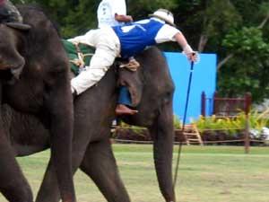 Sport Thailandia - polo su elefante
