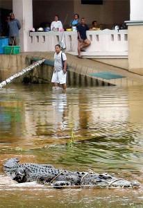 coccodrillo Thailandia 2011