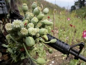 coltivazione oppio Thailandia