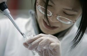 individuato in Asia ceppo mutante virus influenza aviaria