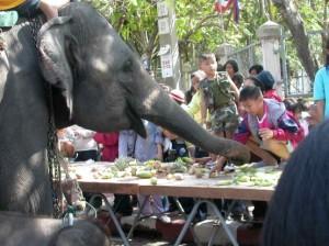Elefante in Thailandia