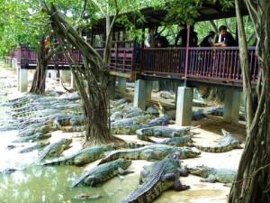 Coccodrilli Pattaya-Thailandia