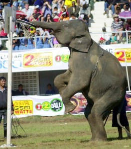 Surin Elephant Round-Up in Thailandia
